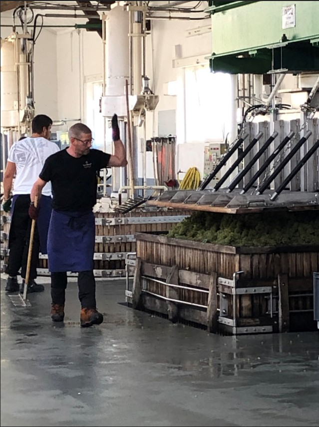 4,000 kilos of freshly picked grapes about to be pressed into juice