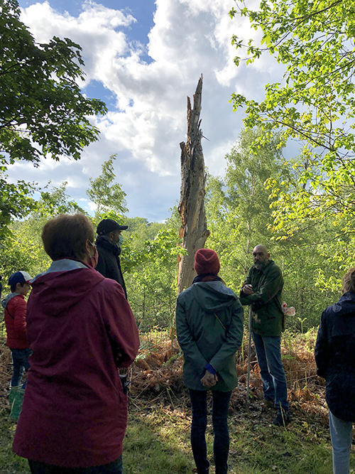 During the tour, forest expert Arnaud de Grave explains that burned trees create the perfect habitat for certain types of insects to thrive